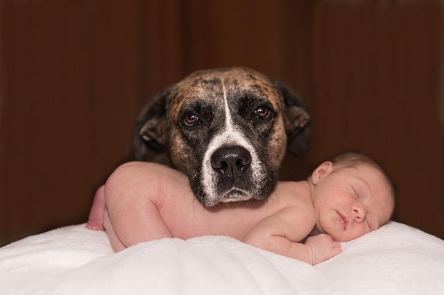 赤ちゃんを育てる
